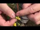 Как вырастить томаты помидоры в теплице Ещё о технологии выращивания томатов