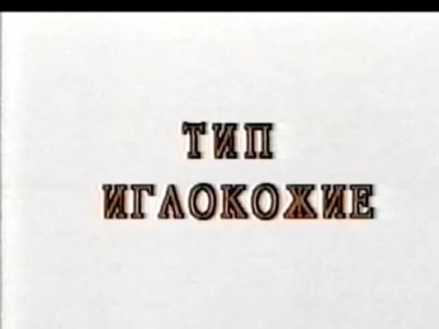 09_Тип Иглокожие