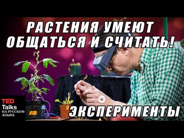 TED на русском - РАСТЕНИЯ УМЕЮТ ОБЩАТЬСЯ И СЧИТАТЬ - ЭКСПЕРИМЕНТЫ
