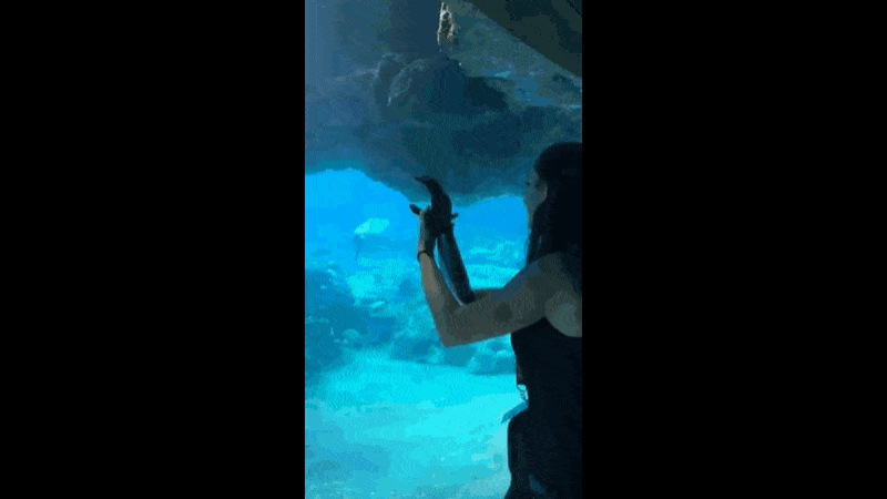 Dolphins intrigued by woman's bionic arm - Create, Discover and Share GIFs on Gfycat