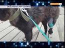 Без свидетелей в Ново Молокове средь бела дня дробовым выстрелом ранили собаку