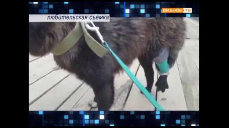 Без свидетелей: в Ново-Молокове средь бела дня дробовым выстрелом ранили собаку