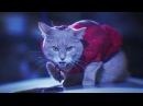 Verinsky Krupnov - Киски на вписке (Official Video)