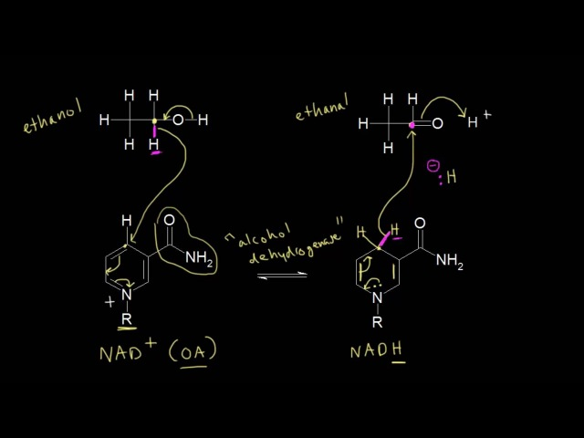 Biological redox reactions | Alcohols, ethers, epoxides, sulfides | Organic chemistry | Khan Academy