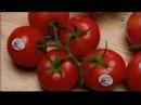 Выращивание тепличных помидор Из чего это сделано