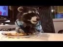 Енот кушает очень мило