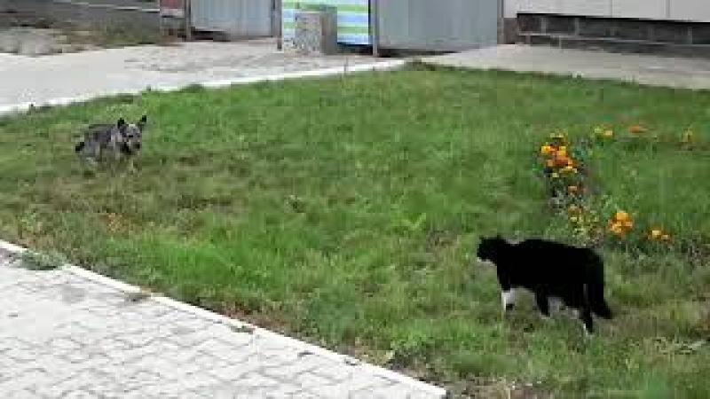 Схватка кота и собаки... бой с жестокой и трагической концовкой...