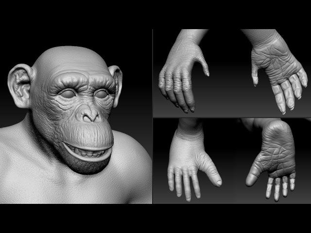 Chimpanzee speed sculpt in ZBrush work in progress