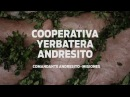 Cooperativa Yerbatera Andresito производство Йерба Мате