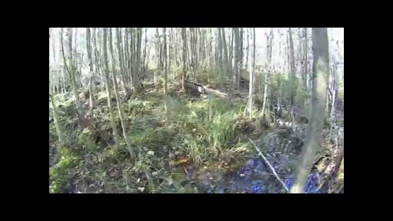 Шушмор. Чикалиное болото. Ужасный затопленный лес