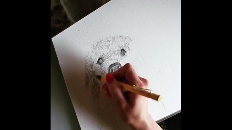 Lamy safari карандаш