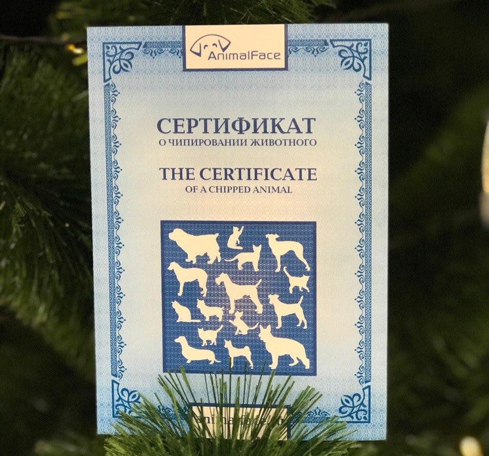 чипирование кошки для выезда за границу, чипирование собаки для выезда за границу
