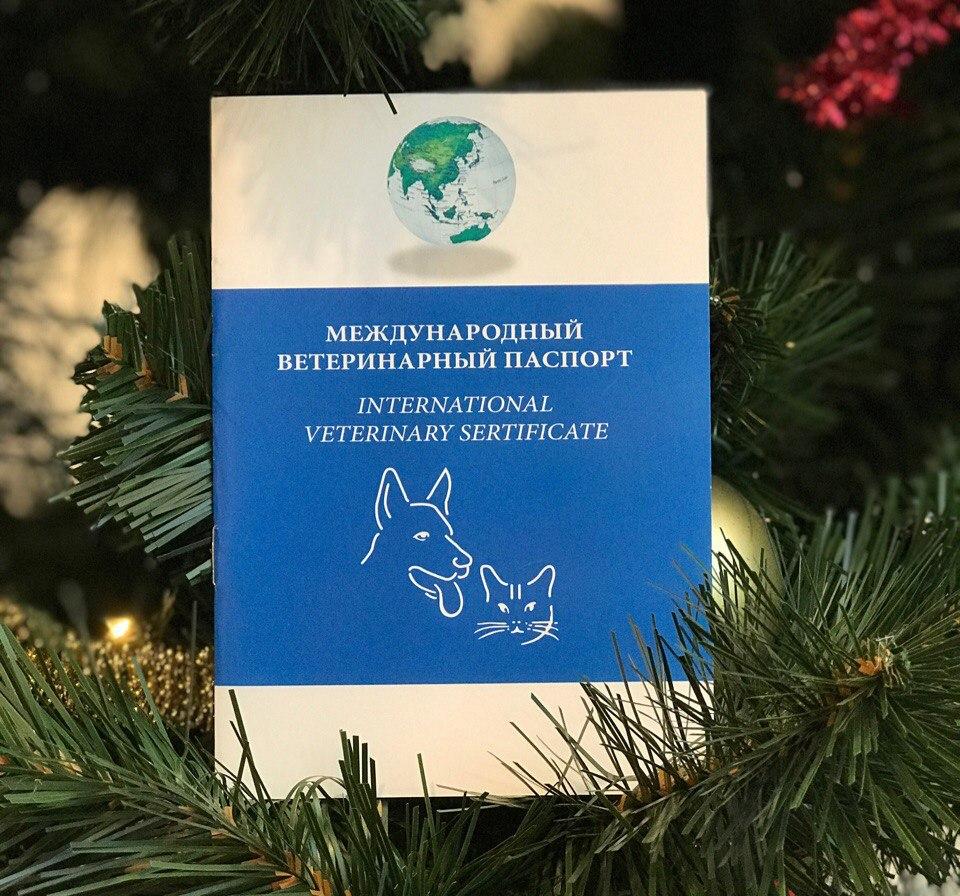 купить ветпаспорт для кошки с прививками, международный ветеринарный паспорт для кошки купить