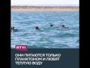 Как поплавать с акулами