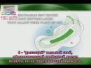 Презентация анионовых прокладок с сайта Winalite USA translated by DK