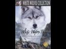 Белые Волки 1993
