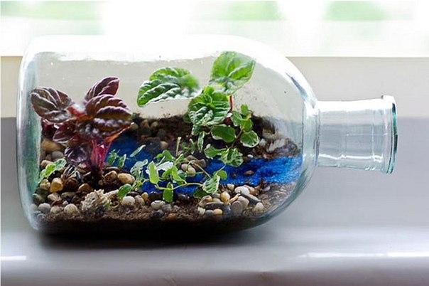 Бизнес-идея: Миниатюрный сад в бутылке Сегодня расскажем об одной оч