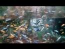 Океанариум15 рыбки очень красивые