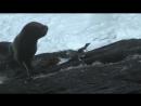 Беги, пингвинчик, беги!