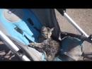 Детская песенка - Мы везём с собой кота