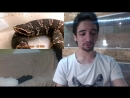 11.04.2017 ГАДЮКА В ЭФИРЕ. Мексиканский щитомордник на стриме ЧЭ