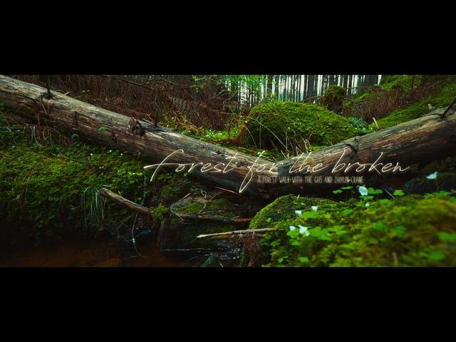 'Forest For The Broken' [LUMIX GH5 V-LogL ZHIYUN Crane]