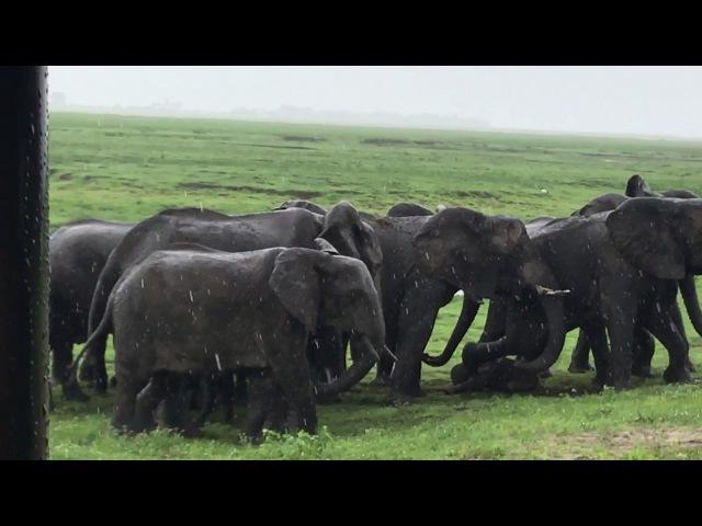 Рождение слоненка и чувство сплоченности ;)