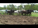 North Carolina Work Horse and Mule Association