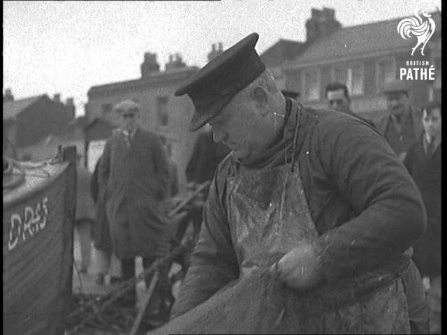 Glut Of Sprats In The Dover Straits (1938) | British Pathé
