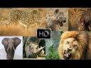 7 STARS DE LA SAVANE AFRICAS SUPER SEVEN DOC HD