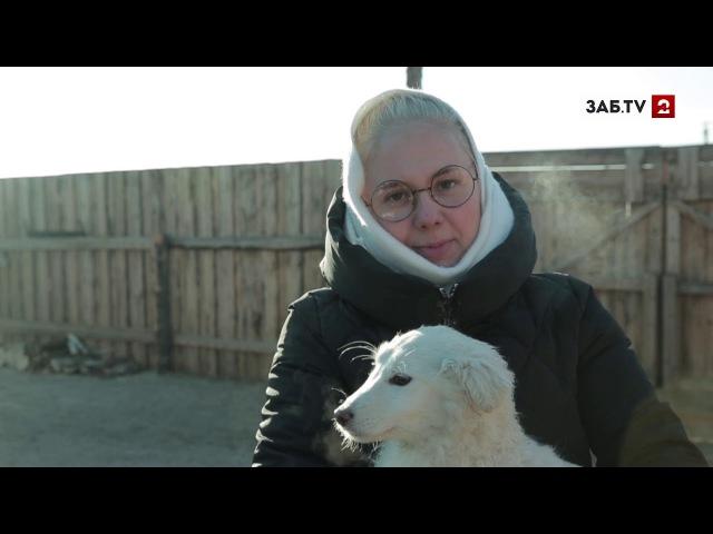 «Мокрый нос»: Ведущая программы Город рассказала, каких собак люб...
