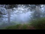 J.B.Loeillet (John) Sonata d-moll for flute &amp Basso Continuo op.3 №2 Part2 Allegro