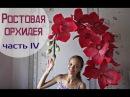 Большие цветы Ростовые орхидеи Часть 4