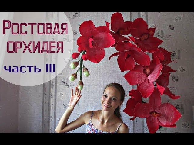 Большие цветы | Ростовые орхидеи. Часть 3
