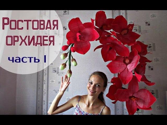 Большие цветы | Ростовые орхидеи. Часть 1