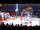 Слон упал на Зрителей Цирк Дзива Могилев