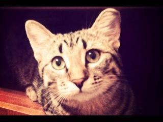 Веселая Лапа Кошка Дуська  / #СеменАлиса