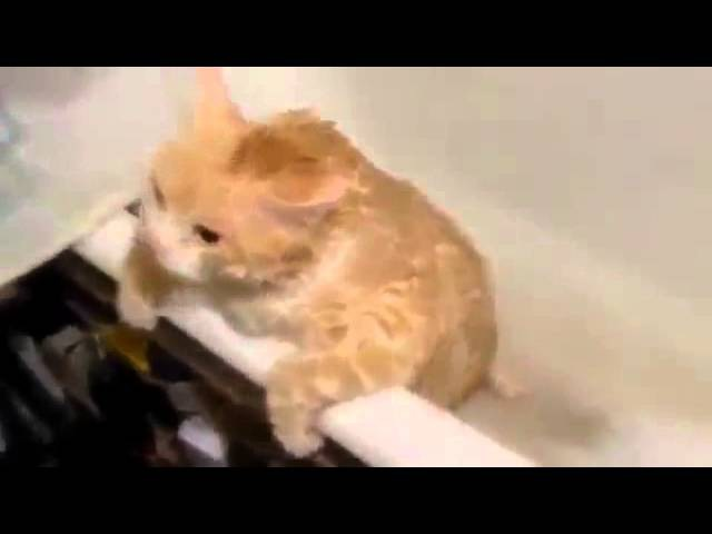 Толстый рыжий кот в ванной