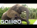 Die Tierfreundschaft zwischen Elefant und Hund Galileo ProSieben