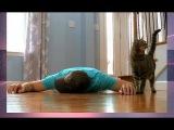 #33 Реакция кота на смерть хозяина,смешные видео, новые приколы Февраль 2018