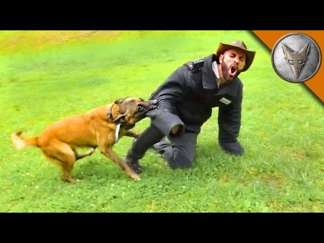 УКУС СОБАКИ ИЩЕЙКИ.Разыскная собака против человека.Brave Wilderness на русском