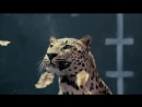 Ответ на рекламу Мерседеса от Ягуара