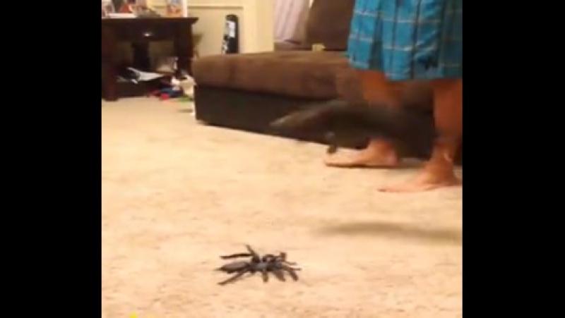Пауков боишься?