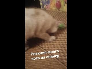 кот спинер😂😋👌