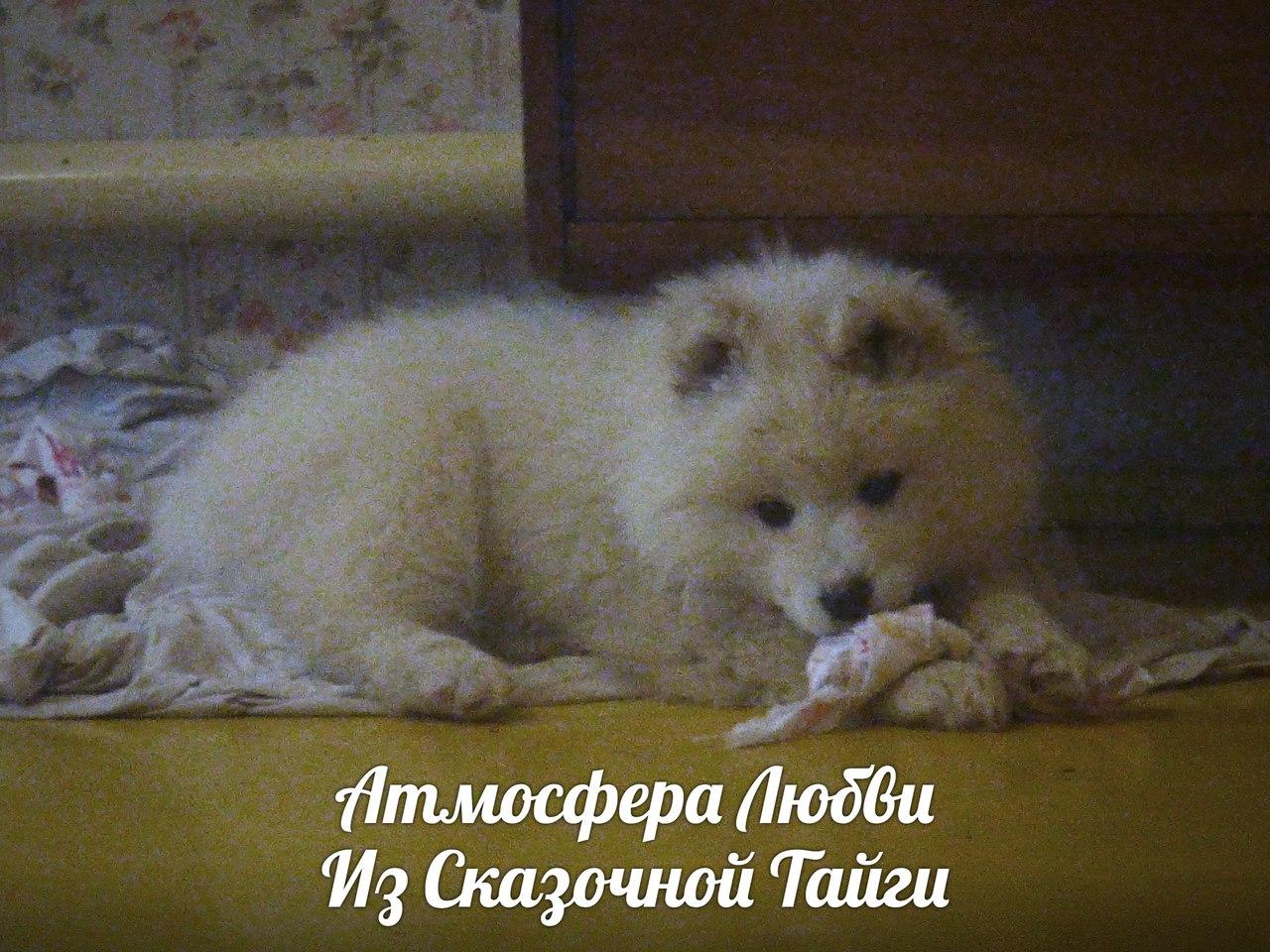 https://pp.userapi.com/c841133/v841133567/6e66a/tsehzqXIRVk.jpg
