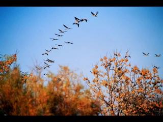 Улетают птицы