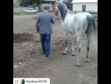 Кабардинская лошадка ?