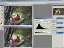 Видеоуроки по Photoshop от Игоря Ульмана 03 Преимущество исползования большой глубины цвета CS2