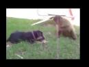 Самые Смешные Приколы Про Животных 2017,Funny Videos,Best Funny Fail Compilation,Funny Videos 2017