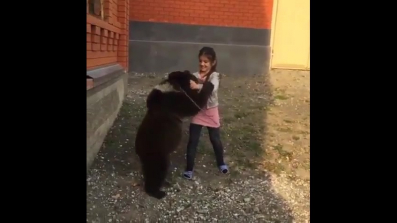 Девочка борется с медведем